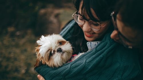 Essentials for New Dog Owners