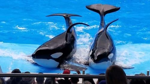 """Sanctuaries and Cetacean """"Bans"""""""