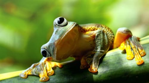 The Frog and Other Visitors