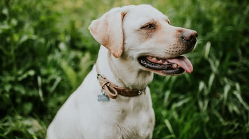 Must Have Products to Mask Pet Odor