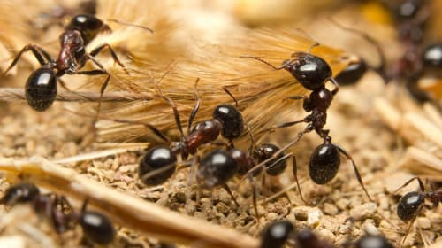 Are Ants More Human Than Us?