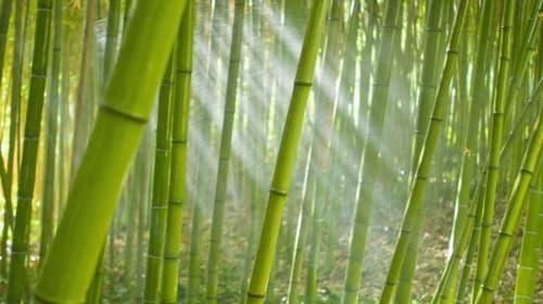 Bamboo Munchers