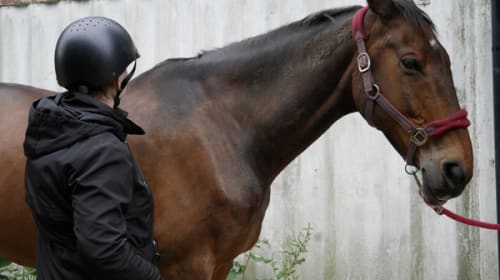 Could Equine Assisted Therapy Benefit Those With Personality Disorders