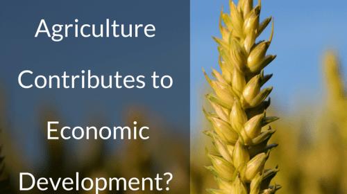 How Agriculture Contributes to Economic Development