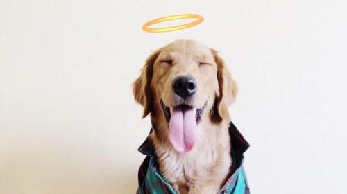 My Dog-Sitting Story