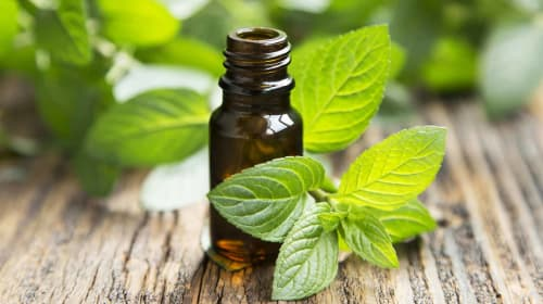 Best Uses for Peppermint Essential Oil to Look Into