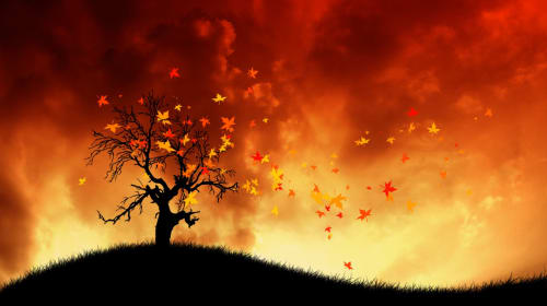 Flaming Branches of the Ozimanda Tree