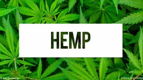 Hemp, the Next Super Crop?