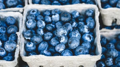 Blueberries: The Silent Nurturer