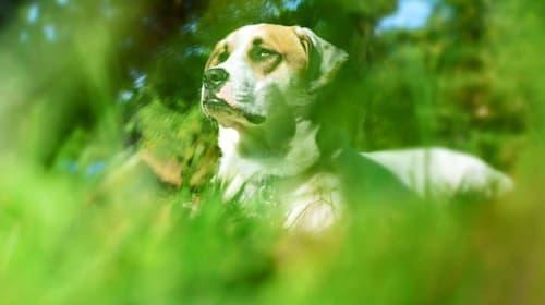 Odin: A Dog's Story
