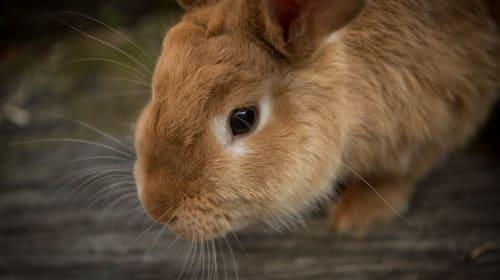 Teach Your Rabbit 3 Simple Tricks