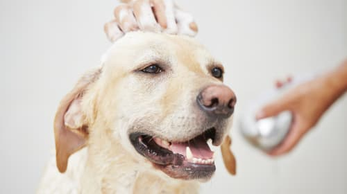 10 Awesome Jobs for Pet Lovers