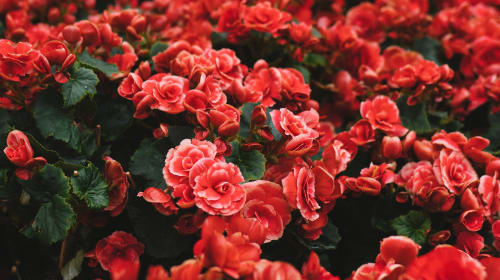 Flowers and Genders