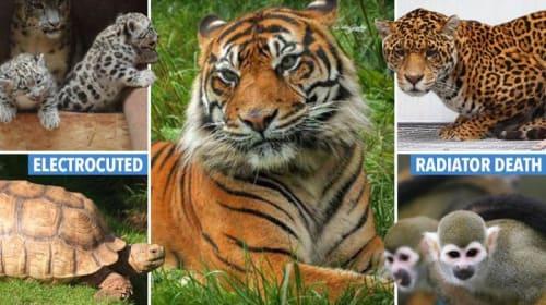 Animal Slavery