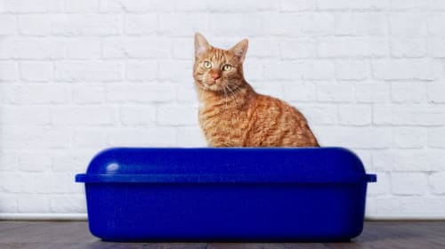 Best Organic Cat Litter Brands