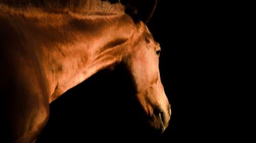Equine Soul