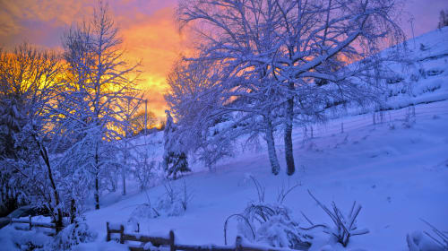 Cold Winter World