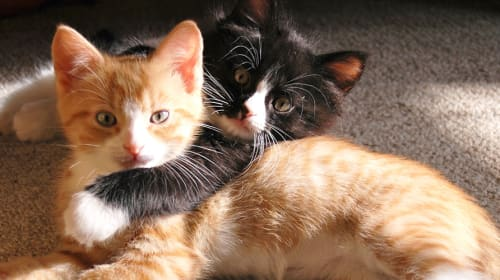 5 Positive Impacts of Cats on Mental Health