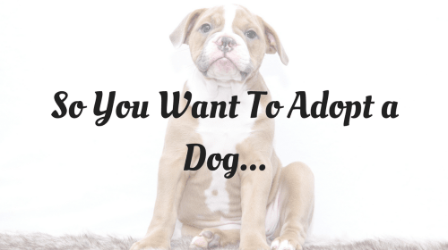 So You Want to Adopt a Dog...
