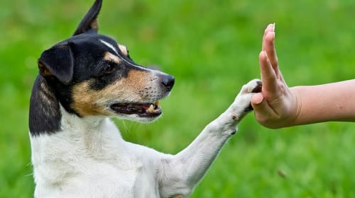 Training That A Dog Can Live With