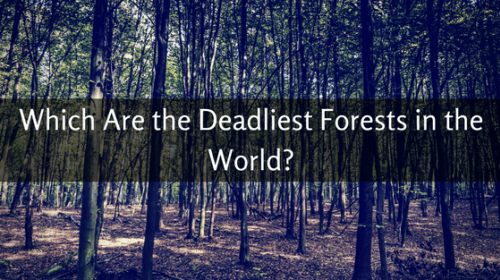 Which Are the Deadliest Forests in the World?