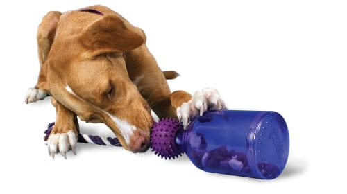 Must-Have Toys for Large Dogs