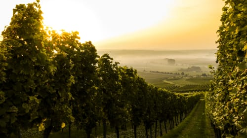 Wine Country Trips You Need to Add to Your Bucket List