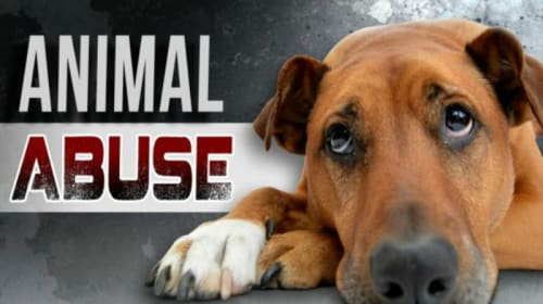 Is Dog Killing Becoming an Epidemic?