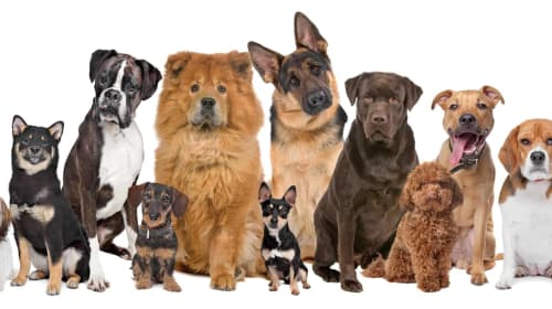Best Pet Adoption Websites