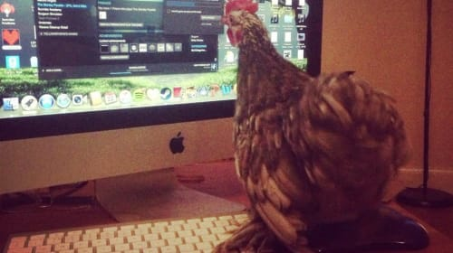 What the Cluck You Talking About?