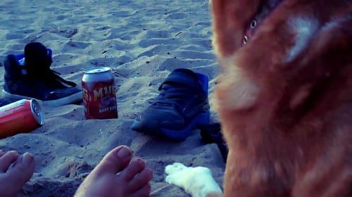 Beach Party Bonfires