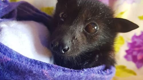 The Importance of Bats in Our Ecosystem