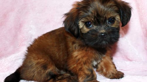 12 of the Best Small Dog Breeds