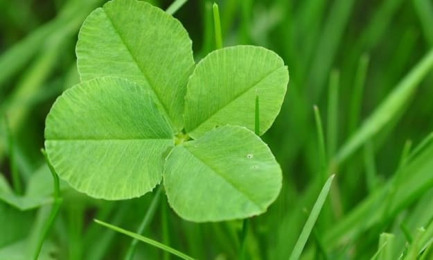 Clovers Bring Luck