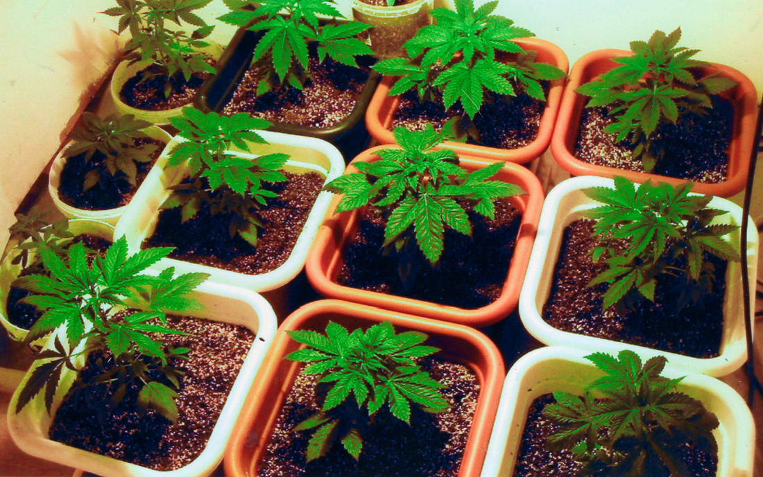 Marijuana Growing FAQ