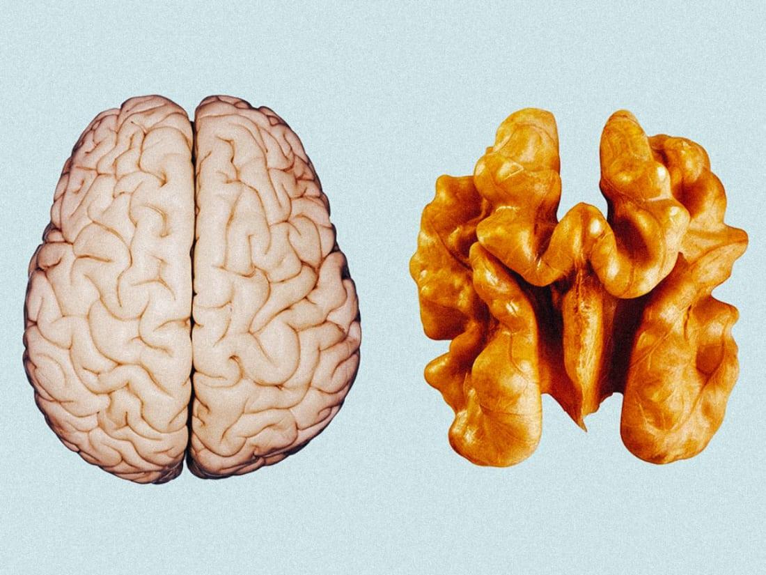 Walnuts Make You Smarter