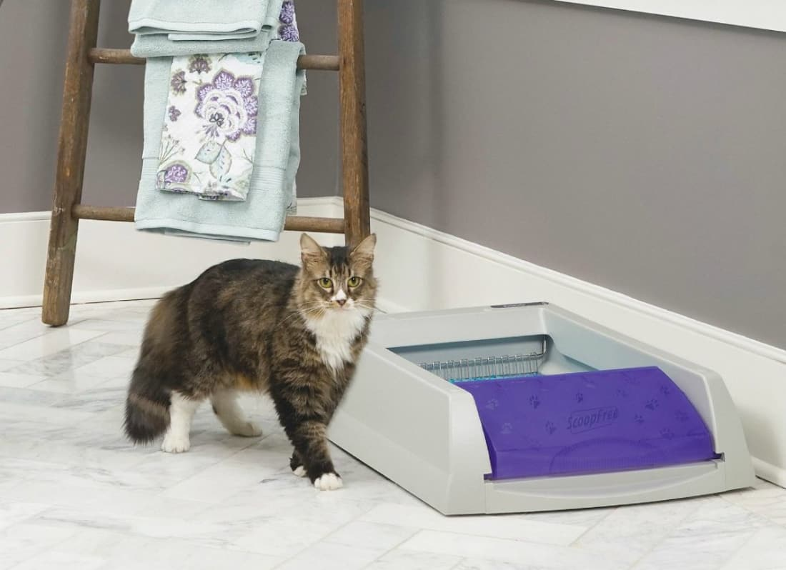 Cleaning Kitty Litter Can Be A Gross Chore, But These Best Self Cleaning Litter  Boxes Make It So You Donu0027t Have To Do It Yourself.