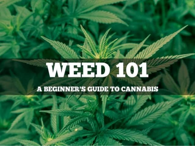 Weed 101 for Beginners