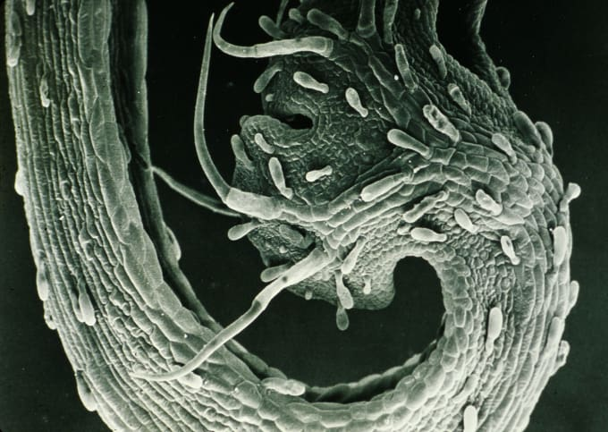 black and white mutated cell