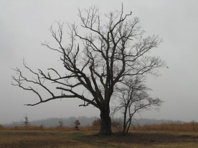 Devil's Tree - Bernards Township