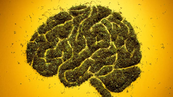 Marijuana causes brain damage — or makes you stupid.