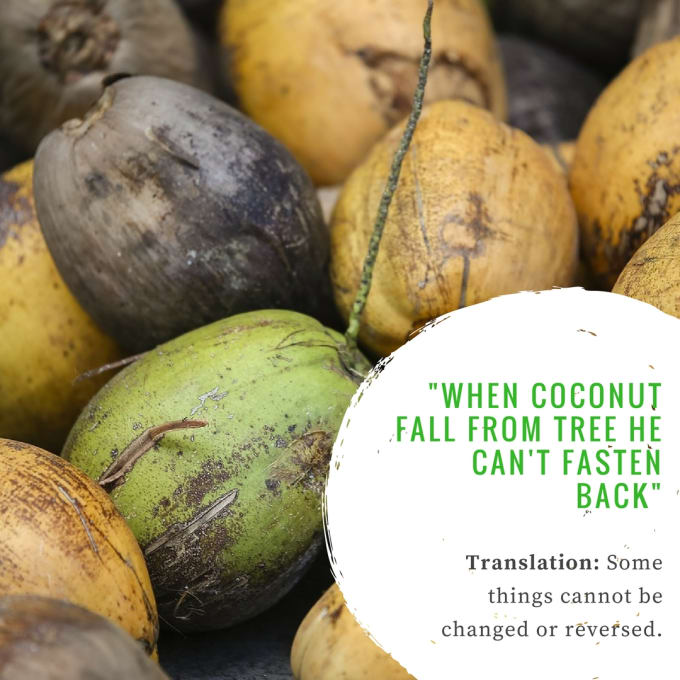"""""""When coconut fall from tree he can't fasten back."""""""