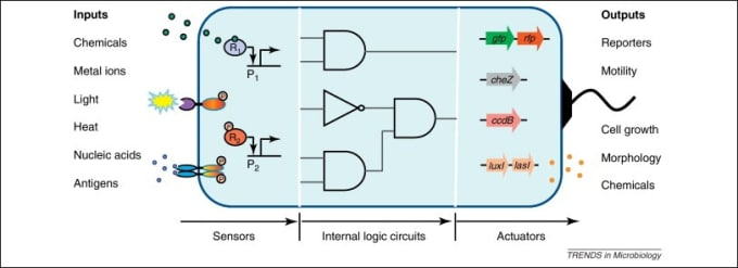 Cells designed for programmed functions: genetically engineered cell circuits custom designed via methods in synthetic biology, in comparison to electronic circuits (via Trends in Microbiology 2012).