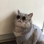 Helany & Cats
