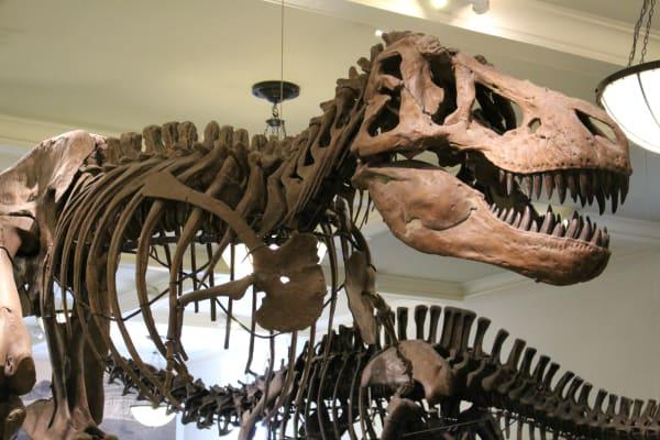 The Dead Zoo: Tyrannosaurus Rex | Futurism