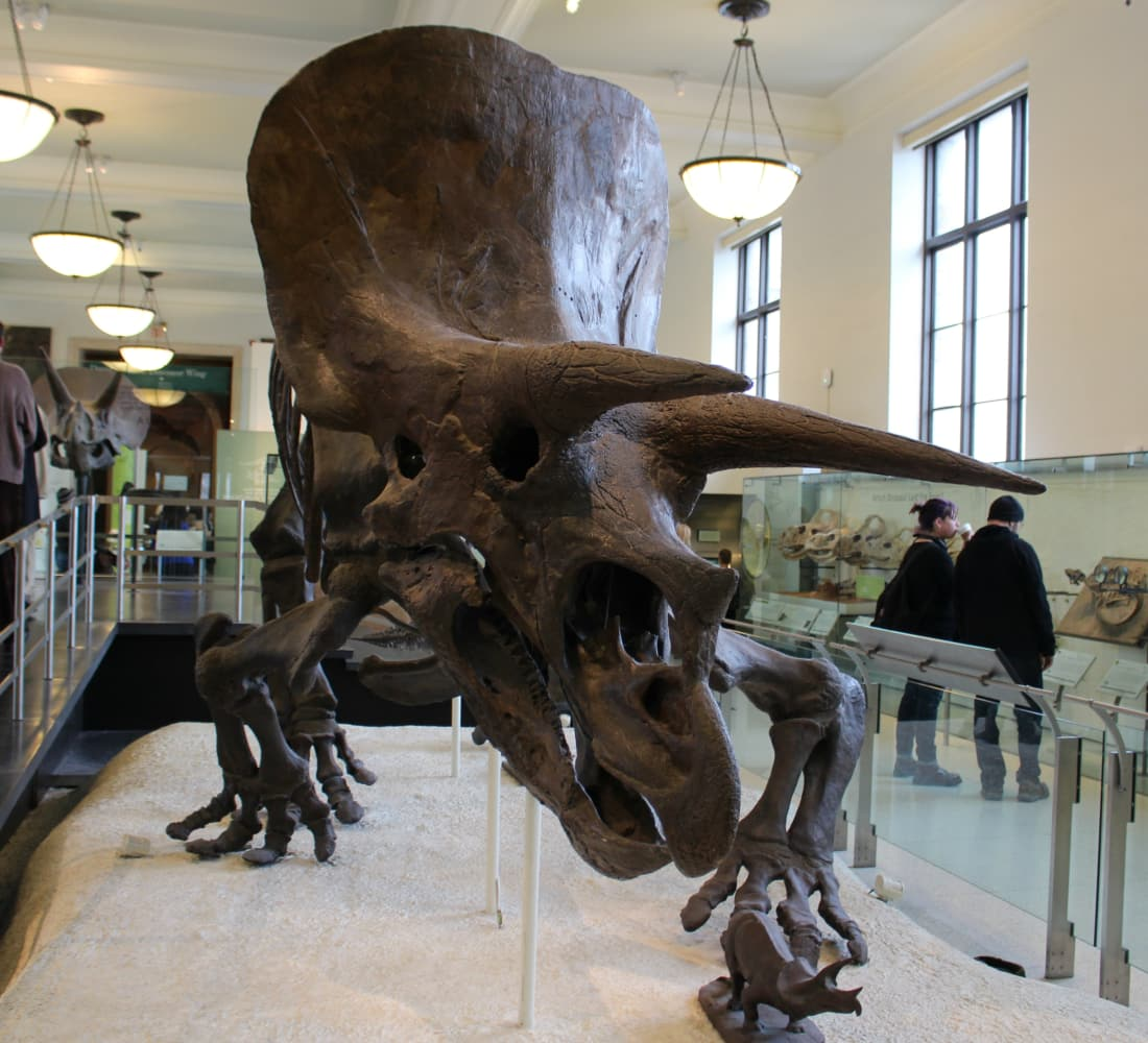 The Dead Zoo: Triceratops