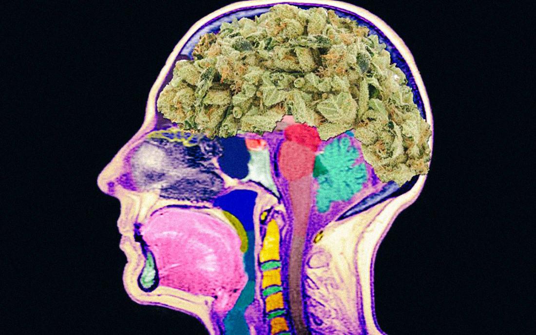 Мозг курящего марихуану семена конопли для мужчин