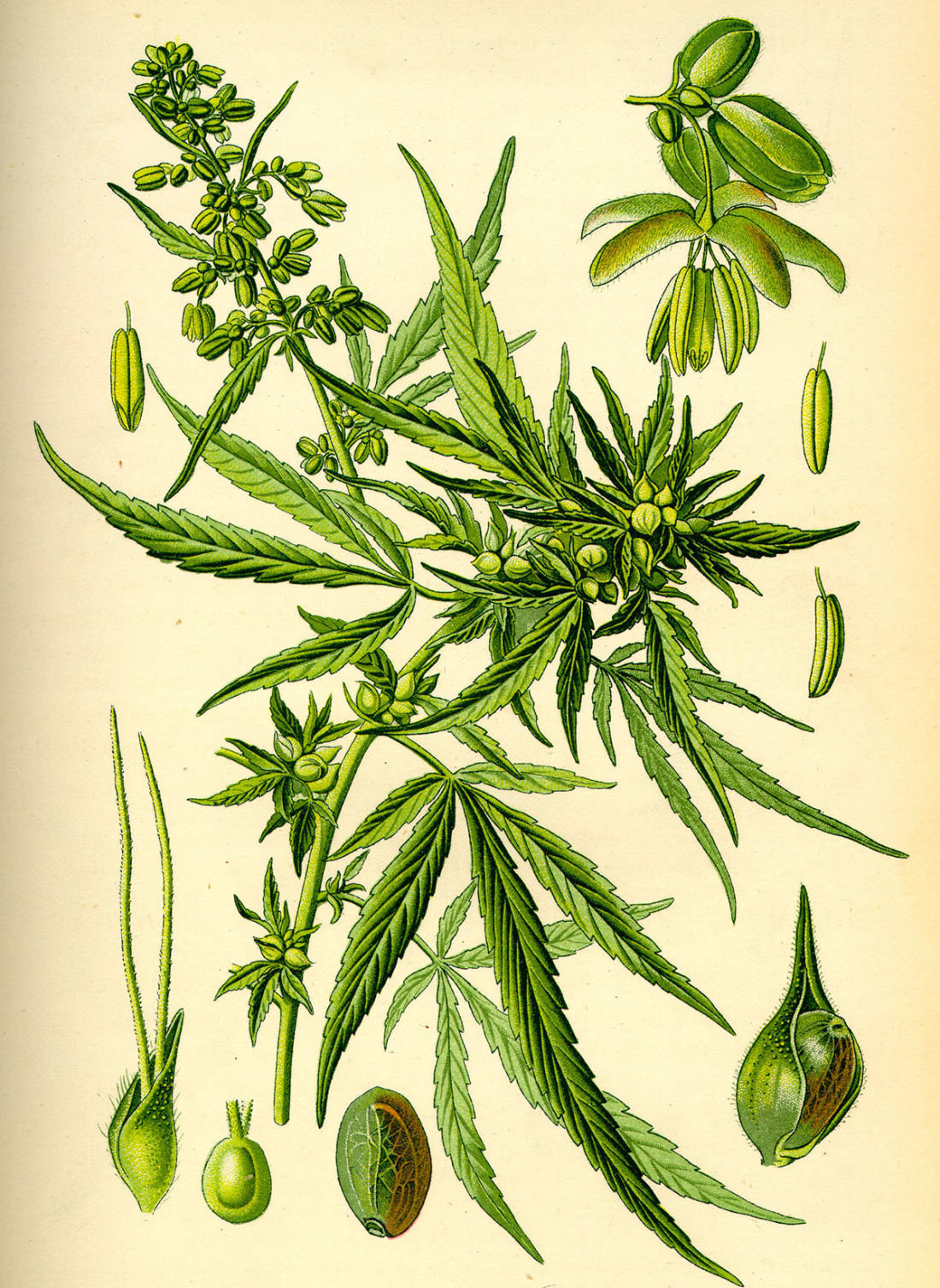 How to grow potent marijuana potent image via daily public nvjuhfo Image collections