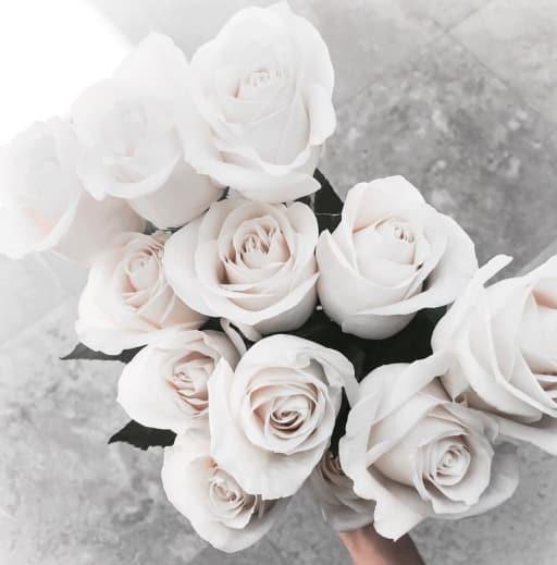 white roses poets