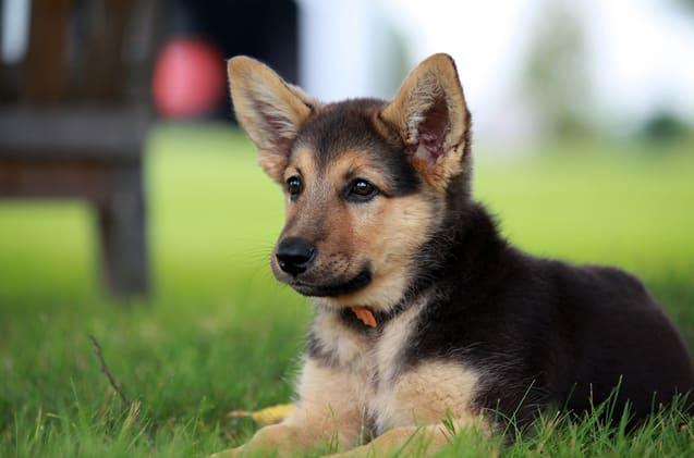 the truth behind dog breeding petlife